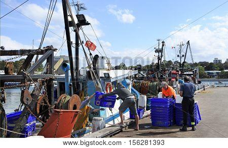Australian Fishermen Unloading Seafood In Sydney Fish Market Wharf Sydney New South Wales  Australia