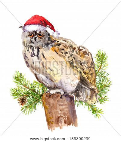 Owl in red santa's hat at stub with fir tree branches. Watercolor christmas animal