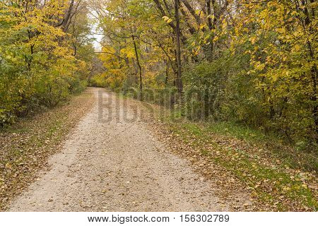 A gravel road in the woods during autumn.