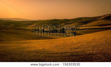 A beauitiful landscape view of a golden cornfield in Andaluicia Southern Spain