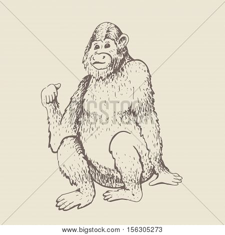 Monkey. Vector illustration. Hand drawn sketch of young orangutan smile monkey is sitting on its ass and finger is pointing back. Goodbye 2016. Vintage engraving style.