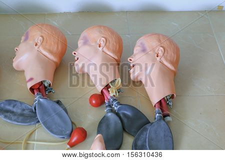 head and windpipe dummy for CPR medical refresher training to assist of physician