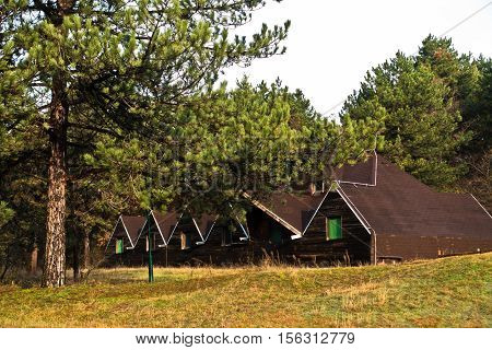 Wooden cabins in pine tree forest at Deliblatska pescara, Serbia