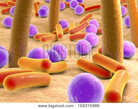 3D illustration of spherical and rod-shaped bacteria on skin with hairs, microscopic view of skin microflora, bacteria Staphylococcus, Streptococcus, Propionibacterium on skin
