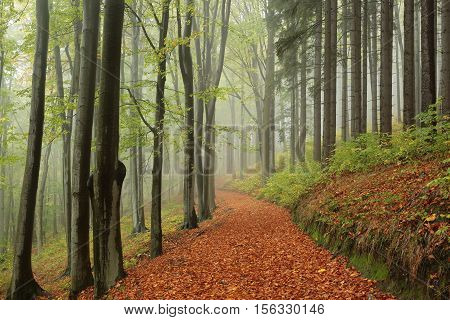 Path through the autumn forest on a misty day.