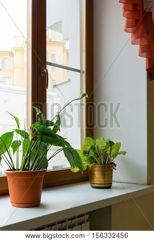 Two potted flower stand on the windowsill