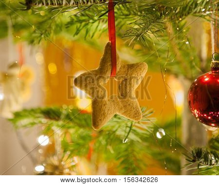 Crunchy gingerbread cookie on christmas tree twig