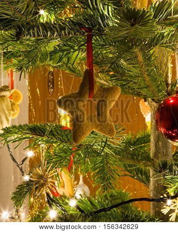 Gingerbread star hanging on a christmas tree branch