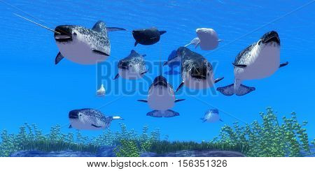 Narwhal Whales 3D Illustration - Narwhal whales live in social groups called pods and live in the Arctic ocean and males have a tusk.