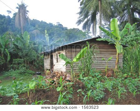 Farmer House In The Tropical Jungle, Cameroon, Africa