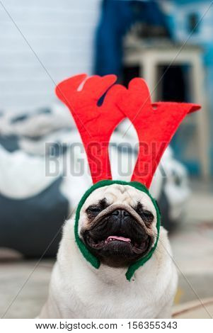 Pug with red deer antlers. Happy dog. Christmas pug dog. Christmas mood. A dog in the apartment. Happy New Year