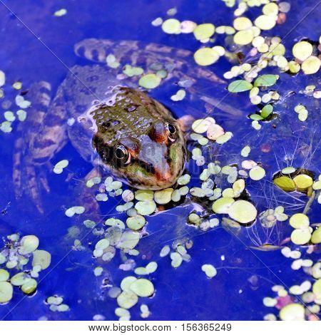 a frog in the lake among aquatic plants