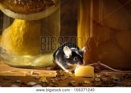 Small mouse eating cheese in larder on old wooden table