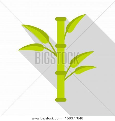 Bamboo icon. Flat illustration of bamboo vector icon for web design