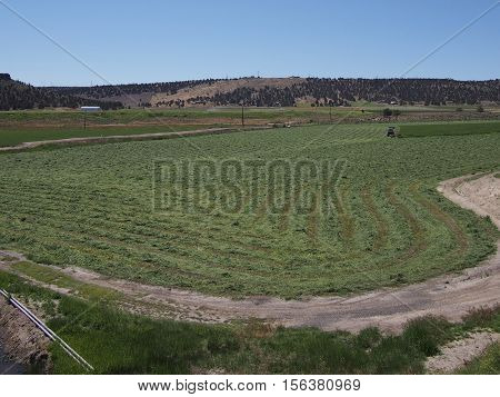 A freshly cut alfalfa crop in Central Oregon begins the drying process before bailing.