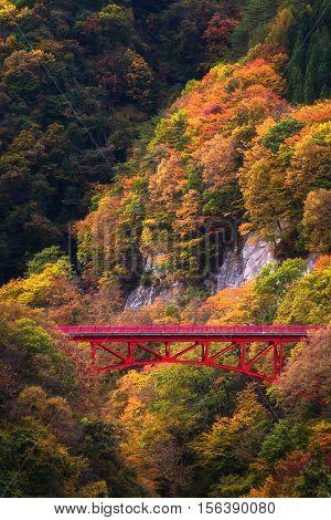 Beautiful Autumn scene on mountain at Takamura Village in Nagano, Japan.