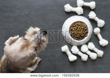dog besides a bowl of kibble food top view