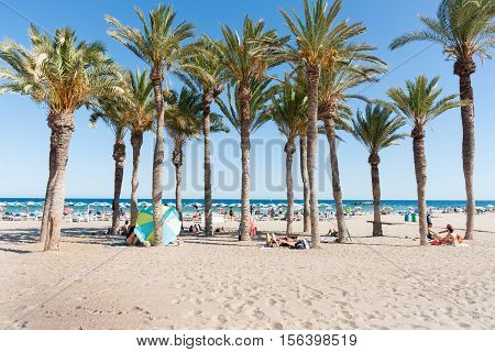 La Vila Joiosa, Spain - August 25, 2016: Summer palm tree grove on beach offers some shade to beachgoers on Mediterranean beach La Vila Joisa, Alicante Spain