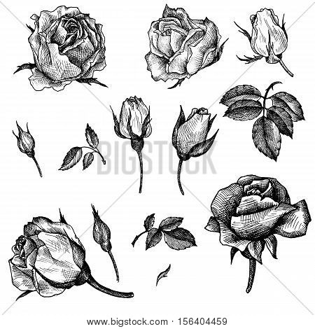 vintage vector floral set of isolated elements in victorian style, flowers, buds and leaves of roses, ink drawing, imitation of engraving, hand drawn design elements