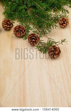 Pine cones and branch of fir-tree needles, close up
