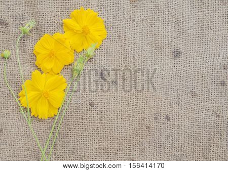 background nature yellow flowers on old sack