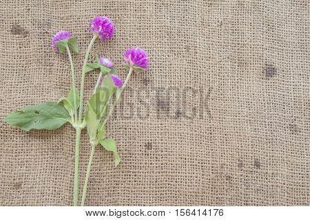 background nature purple flower on old sack