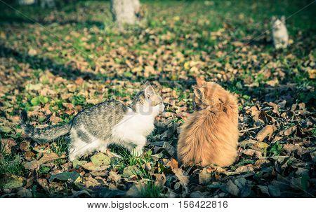 Two domestic cats among the grass and leaves at fall