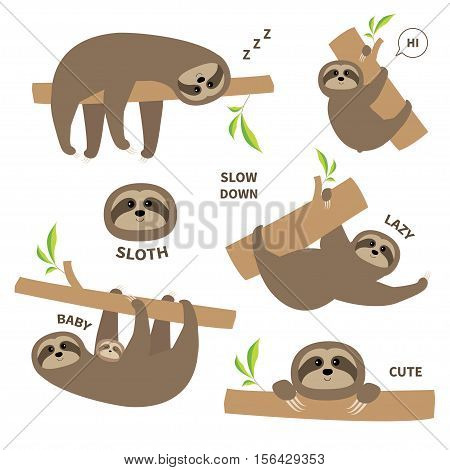 Sloth set mother with baby. Cute lazy cartoon kawaii character. Slow down text. Tree branch Wild joungle animal collection. Isolated. White background. Flat design. Vector illustration poster