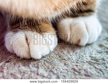 cropped shot of close up of hands cat