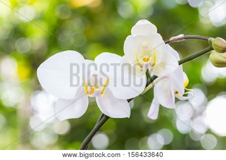 White Orchid In The Garden