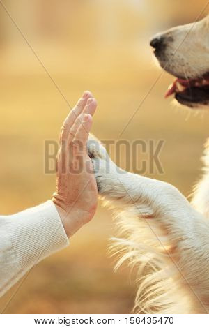 Male hand and dog paw on blurred background. Friendship concept