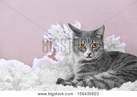 Cute cat on couch at home