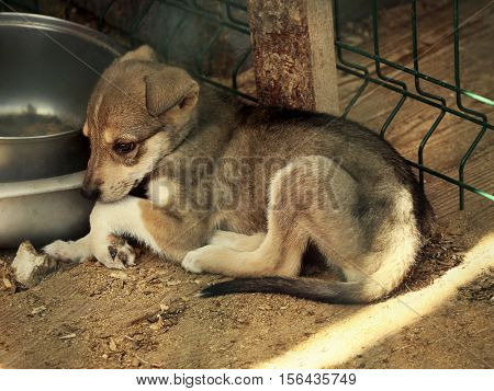 Sad little puppy lying near bowl in animal shelter cage