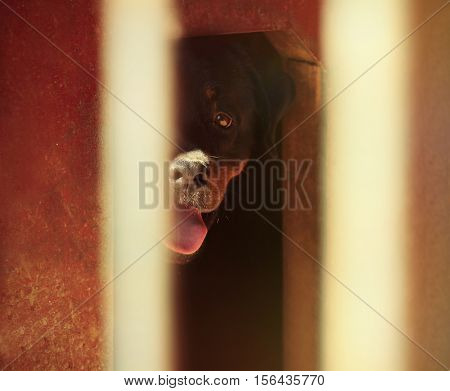 Sad dog hiding in kennel of animal shelter cage, close up view