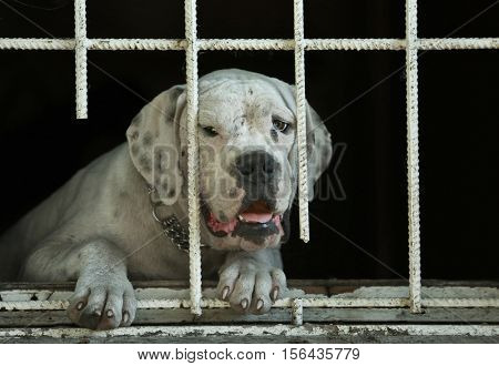 Portrait of sad homeless dog in animal shelter cage