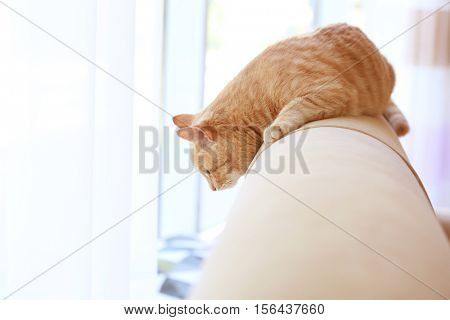 Cute cat on back of coach