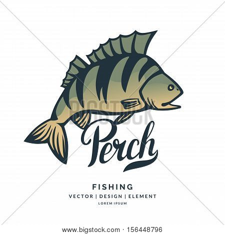 Modern hand drawn lettering word Perch. Calligraphy brush and ink. Vector illustration Fish