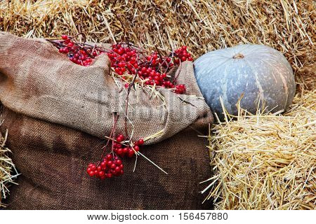Thanksgiving Display of Pumpkin on hay stacks and burlap sack with red berries taken closeup.