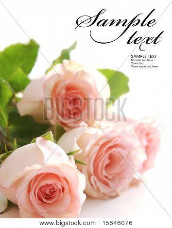 Mooie roos (gemakkelijk te verwijderen van de tekst)