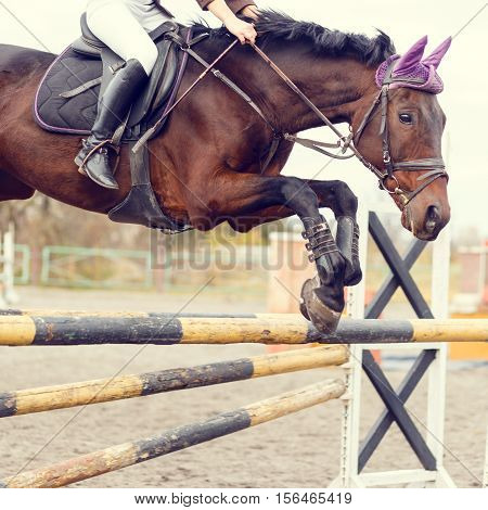 Close Up Image Of Jumping Horse Over Hurdle