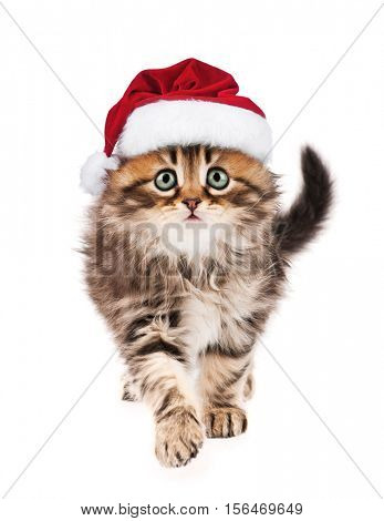 Portrait of Siberian kitten in red Christmas Santa hat. Cute little cat dressed as Santa Claus looking at camera. Christmas kitty walking, isolated on white background.