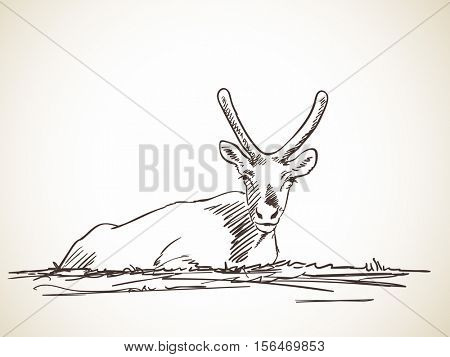 Sketch of lying reindeer fawn isolated Hand drawn vector illustration