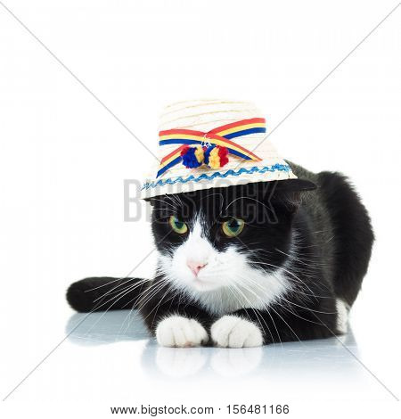 cat wearing traditional romanian hat from maramures county isolated on white background