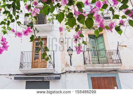 Eivissa White Pink Bougainvillea Flowers