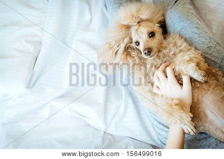 Young woman with her dog in a bed.