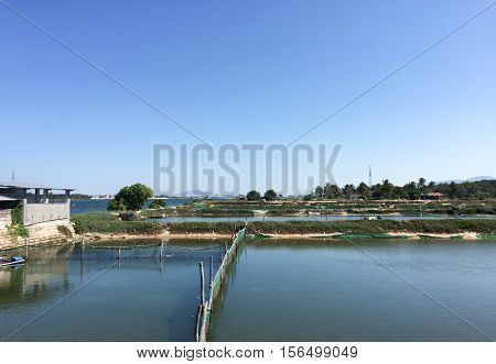 Shrimp Concrete Farming