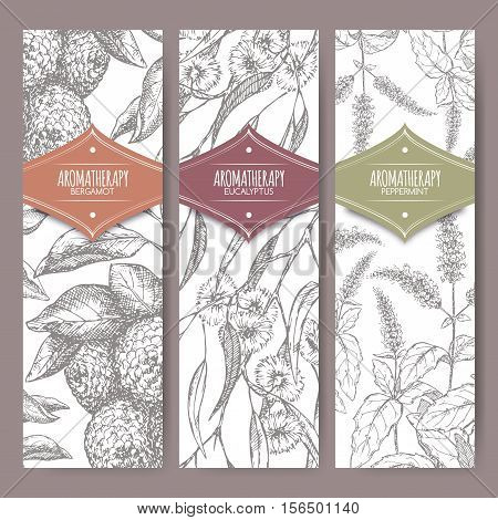 Set of three labels with bergamot, peppermint and eucalyptus sketch. Aromatherapy series. Great for traditional medicine, perfume design, cooking or gardening labels.