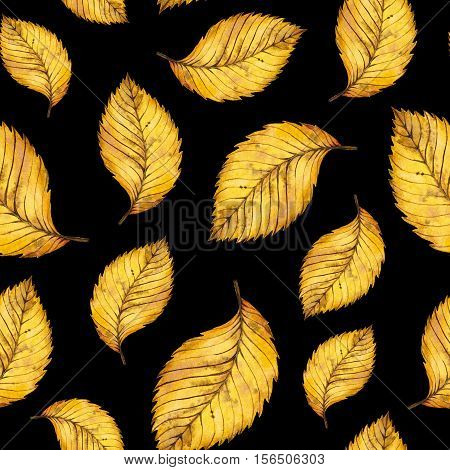 Seamless pattern of watercolor autumn yellow leaves of elm, hand painted watercolour autumn background of falling leaf, design for fabric, textile, wrapping paper, card, invitation, wallpaper, web