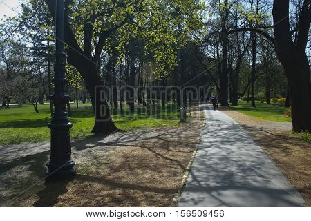 Promenade, with trees and candelabra in spring