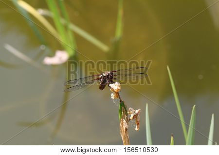 Dragonfly / Dragonfly sitting on a blade of grass